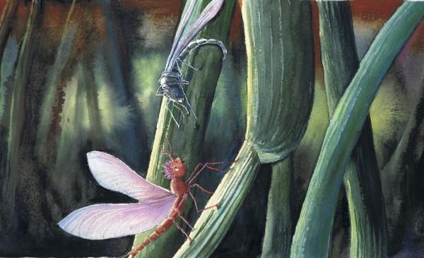 Illustration fra Døgnfluen Viva.