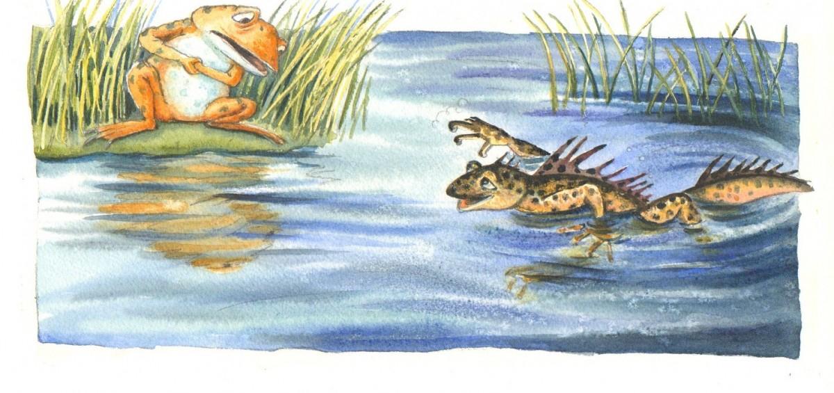 """fra """"Tudses fine venner"""". Tudse møder en Stor Vandsalamander."""